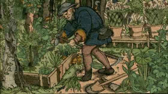 Mand i grøn have
